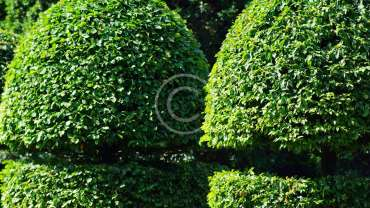 Gardening & Horticultural Services